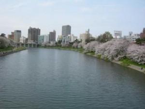 乙川沿いの桜