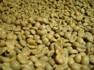 ケニアの生豆