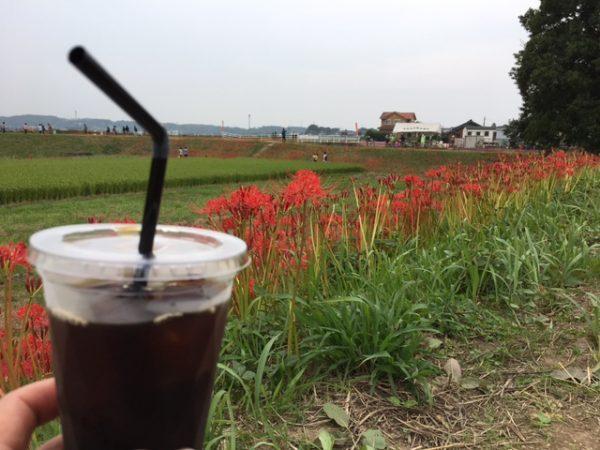 矢勝川の彼岸花とテイクアウトコーヒー