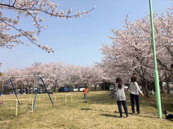 上之山公園 桜2