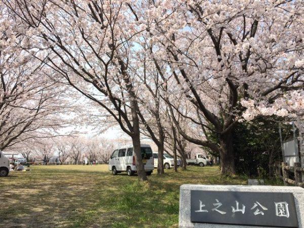 上之山公園 桜1