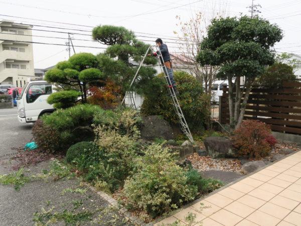 豊環境開発 庭の剪定_2