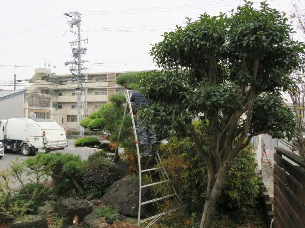 豊環境開発 庭の剪定_4