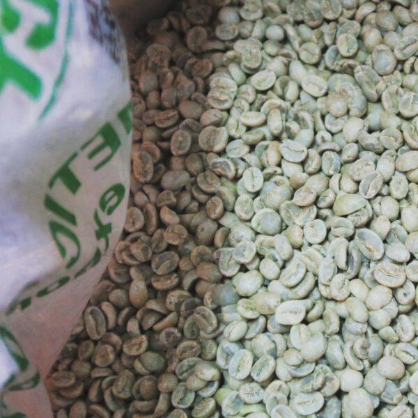 パナマコーヒー アンセルミート農園 珈琲生豆
