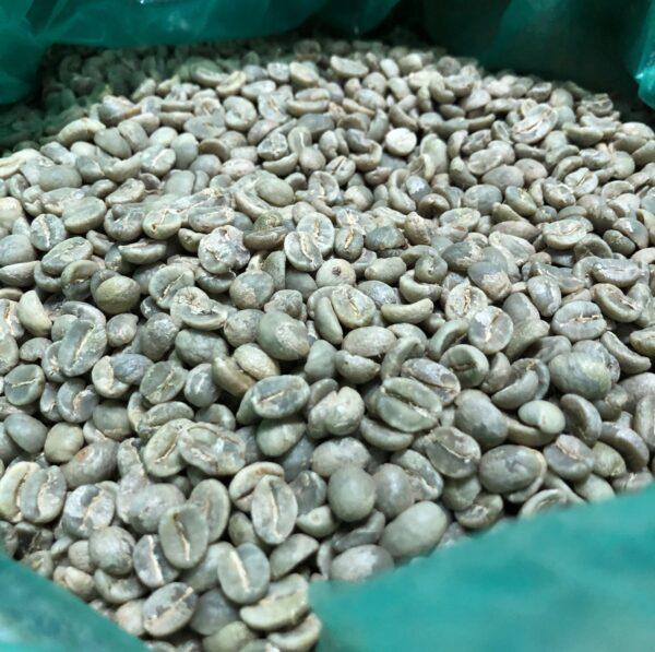ザンビア NCCL農園 生豆