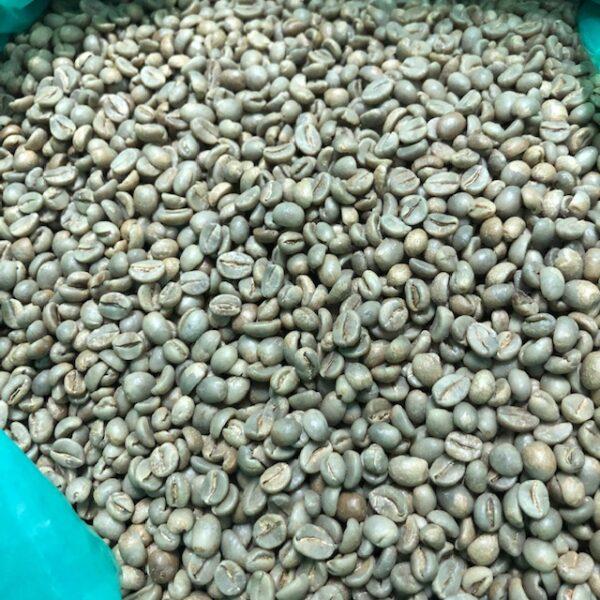 コスタリカ・ソノラ農園・ハニー 生豆
